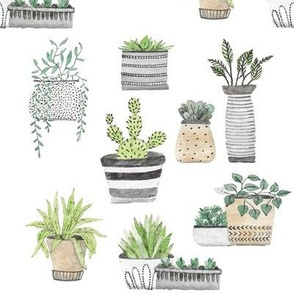 Scandinavian Cacti and Succulents