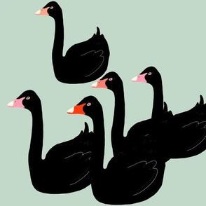 Black Swans on Mint