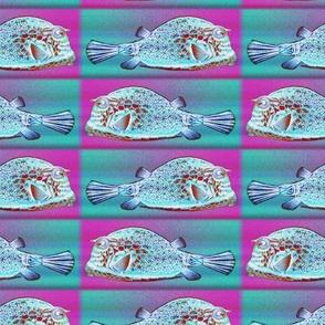 PRETTY FISH 1 AQUA FUCHSIA CHECKERBOARD