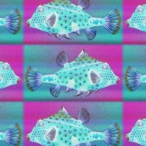 PRETTY FISH 3 AQUA FUCHSIA CHECKERBOARD