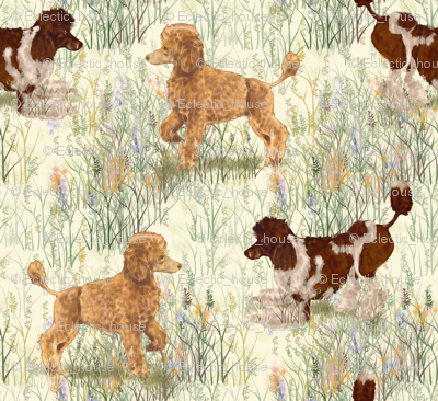Rapricot_and_brown_parti_poodle_in_wildflowers_preview