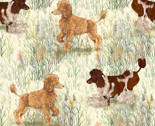 Rapricot_and_brown_parti_poodle_in_wildflowers_thumb