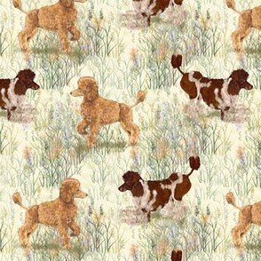 Apricot and Brown Parti Poodle in Wildflowers