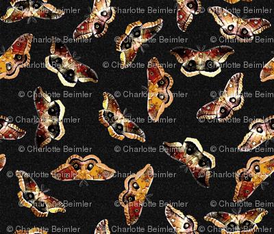 Polyphemus Moths - on Black