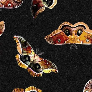 Polyphemus Moths - on Black