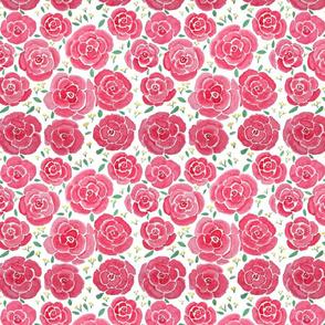 miniature roses - pink
