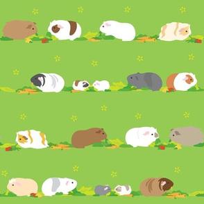 Guinea pigs/Piggies Vegetables Time