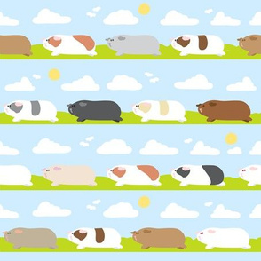 Guinea pigs/Piggies Trip