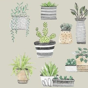 Scandinavian Cacti and Succulents on Taupe