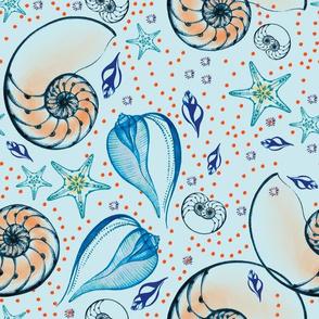 Seashell wonderland