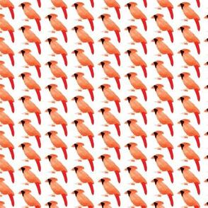 A lot of cardinal birds