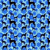 Blue floral iggies