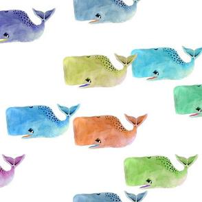Rainbow Whale Pod