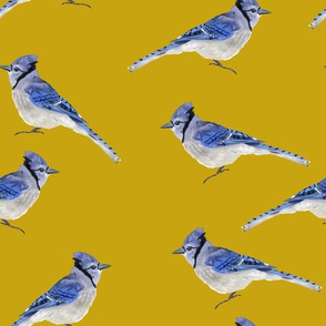 Bluejays - Mustard Background