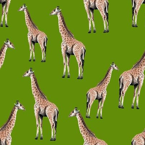 Giraffes on Green Background