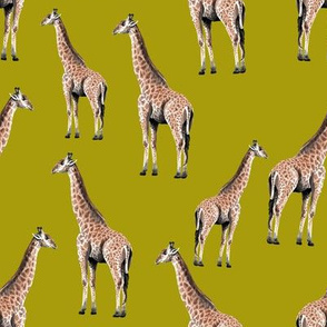 Giraffes on Mustard Background