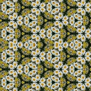 Daisy Field Flowers Floral Photo Pattern Print