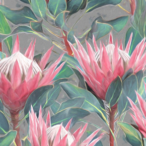 Painted King Proteas - pink on mid grey LARGE