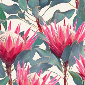 Painted King Proteas - hot pink on cream LARGE