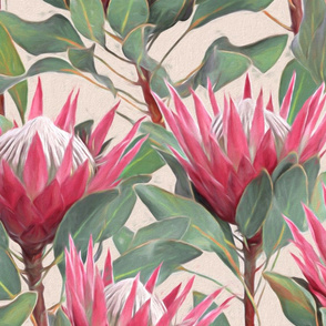 Painted King Proteas - pink on dark cream LARGE