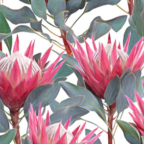 Painted King Proteas - pink on white LARGE