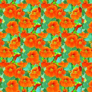 flowers_012Copy