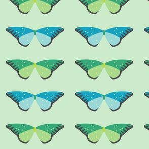butterfly garden blue and green butterflies two