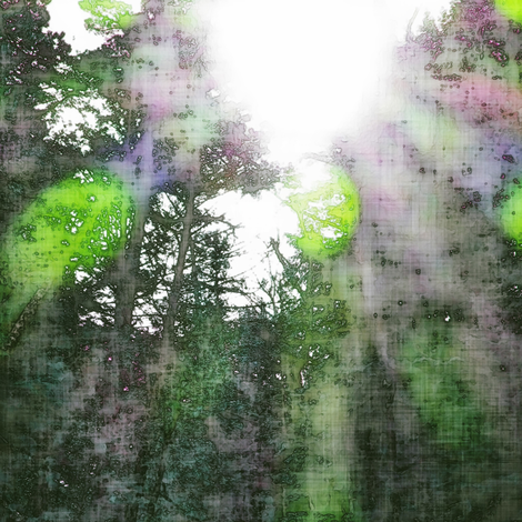 light through the trees fabric by keweenawchris on Spoonflower - custom fabric