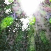 Rlsoh_light_through_the_trees_shop_thumb