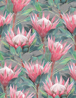 Painted King Proteas - pink on mid grey MEDIUM