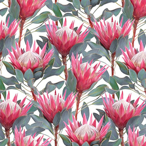 Painted King Proteas - pink on white MEDIUM