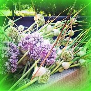 Beautiful Garlic Scrapes