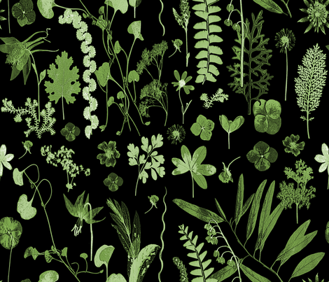 collectors garden green on black fabric by mypetalpress on Spoonflower - custom fabric