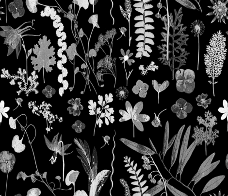 Collectors Garden Black and White fabric by mypetalpress on Spoonflower - custom fabric