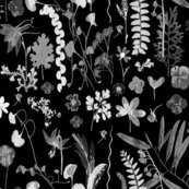 Collectors_garden_grey_on_black_shop_thumb