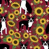Rboston_sunflowers_2_shop_thumb