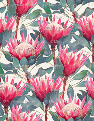 Painted King Proteas - hot pink on cream SMALL