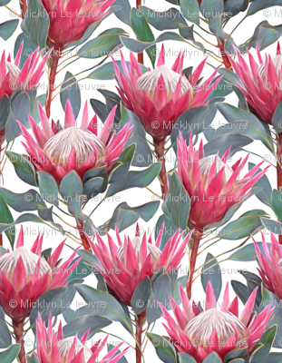 Painted King Proteas - pink on white SMALL