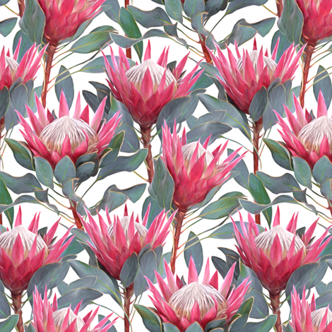 Painted King Proteas - pink on white SMALL fabric by micklyn on Spoonflower - custom fabric