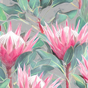 Painted King Proteas - pink on light grey LARGE