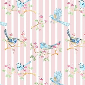 Fairy Wren pink stripe