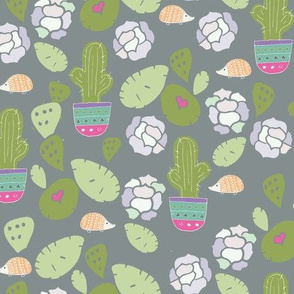 hedgehogs in a garden on succulents and cactus