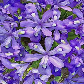 Lativious Iris Purple Mirror