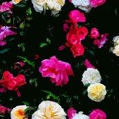 Dark_roses_cutout_shop_thumb