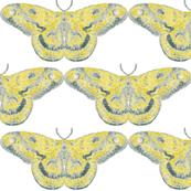 Vibrant Primrose Yellow & Gray Mystic Moth