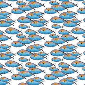 Rrrfish_1_shop_thumb