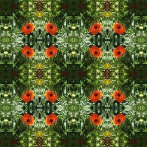 Poppy Flower on Green Background Floral Photo Pattern