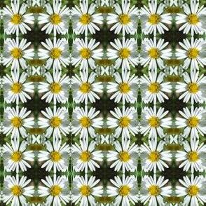 Daisy  Chain Floral Photo Pattern Kaleidoscope