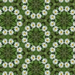 Daisy Chain Floral Photo Pattern