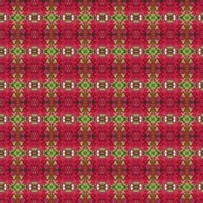Red and Green Floral Photo Pattern